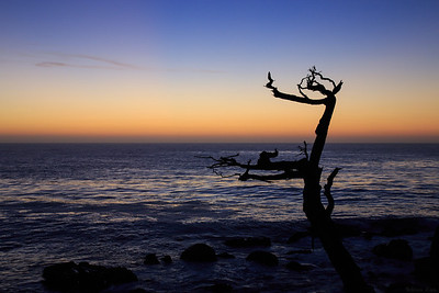 after sunset on 17-mile drive Pebble beach, California