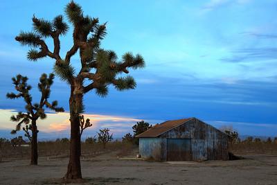 Joshua trees and a barn