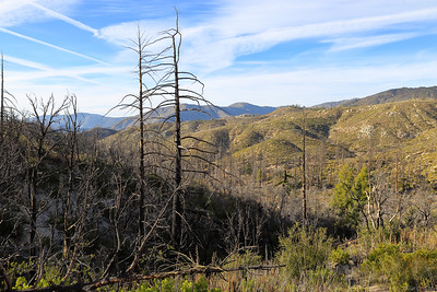 Trees that were burnt during a wild fire in Angels National Forest