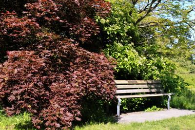 A bench at Queen Elizabeth Park, Vancouver Canada