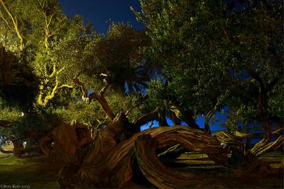 An interesting looking tree at Santa Monica Pier.